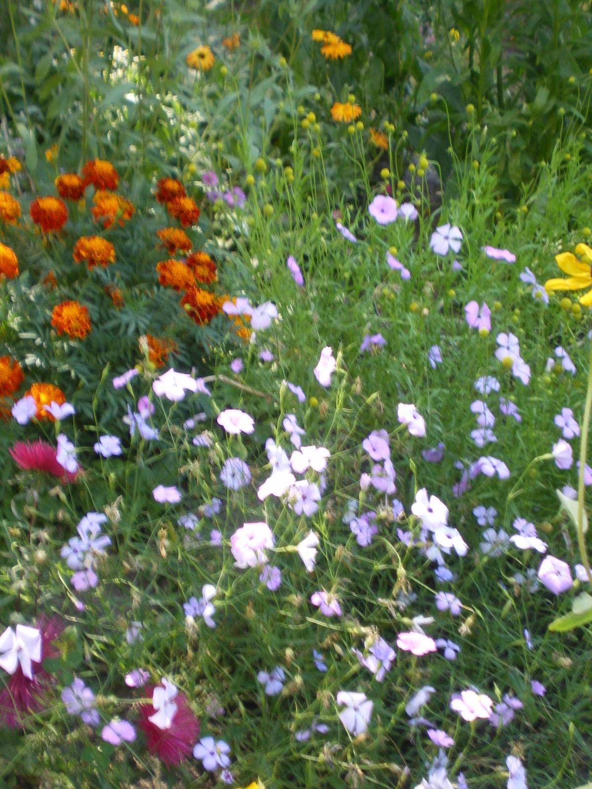 Многолетние цветы с названиями для кладбища фото
