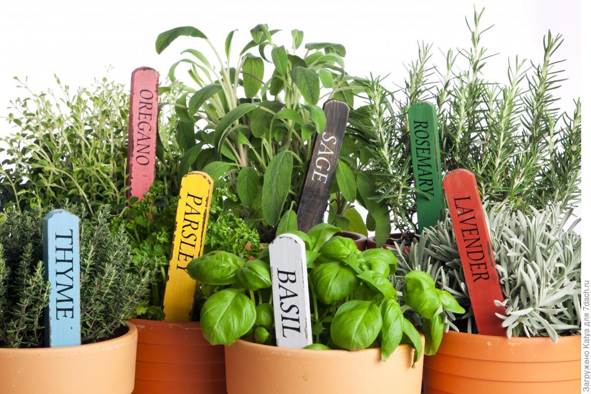 Полезные растения выращивание дома 1