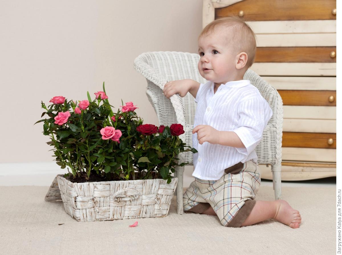 Фото комнатных цветов для детской