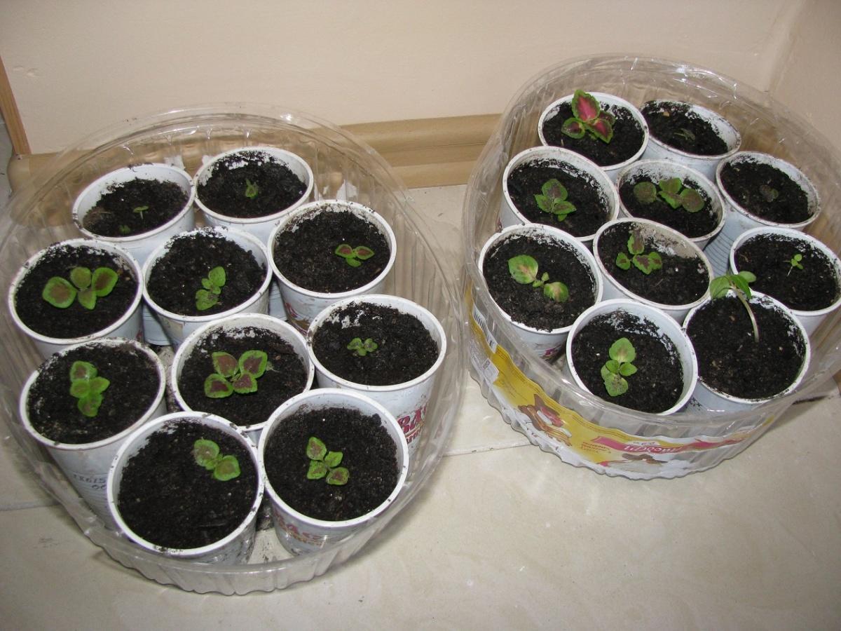 комнатные растения фото и уход в домашних условиях