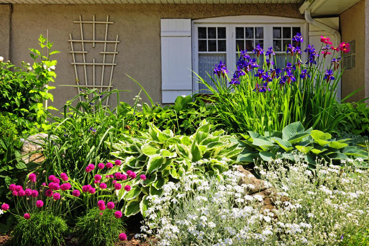 Цветы на клумбе: соседство и совместимость - m
