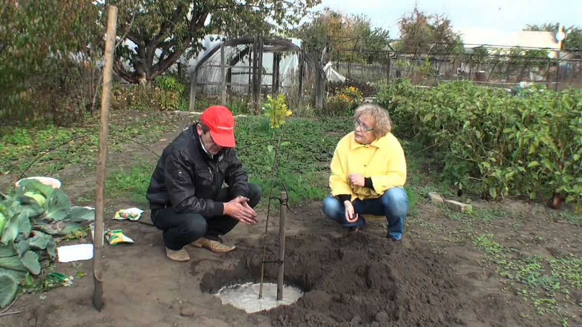 Можно ли сажать плодовые деревья в огороде 56