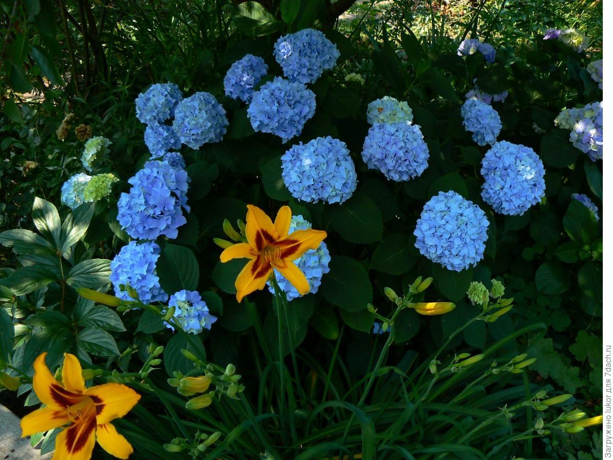 Крупные цветы для сада названия и фото