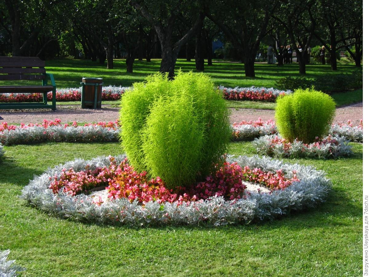 Цветы городских клумб названия и фото