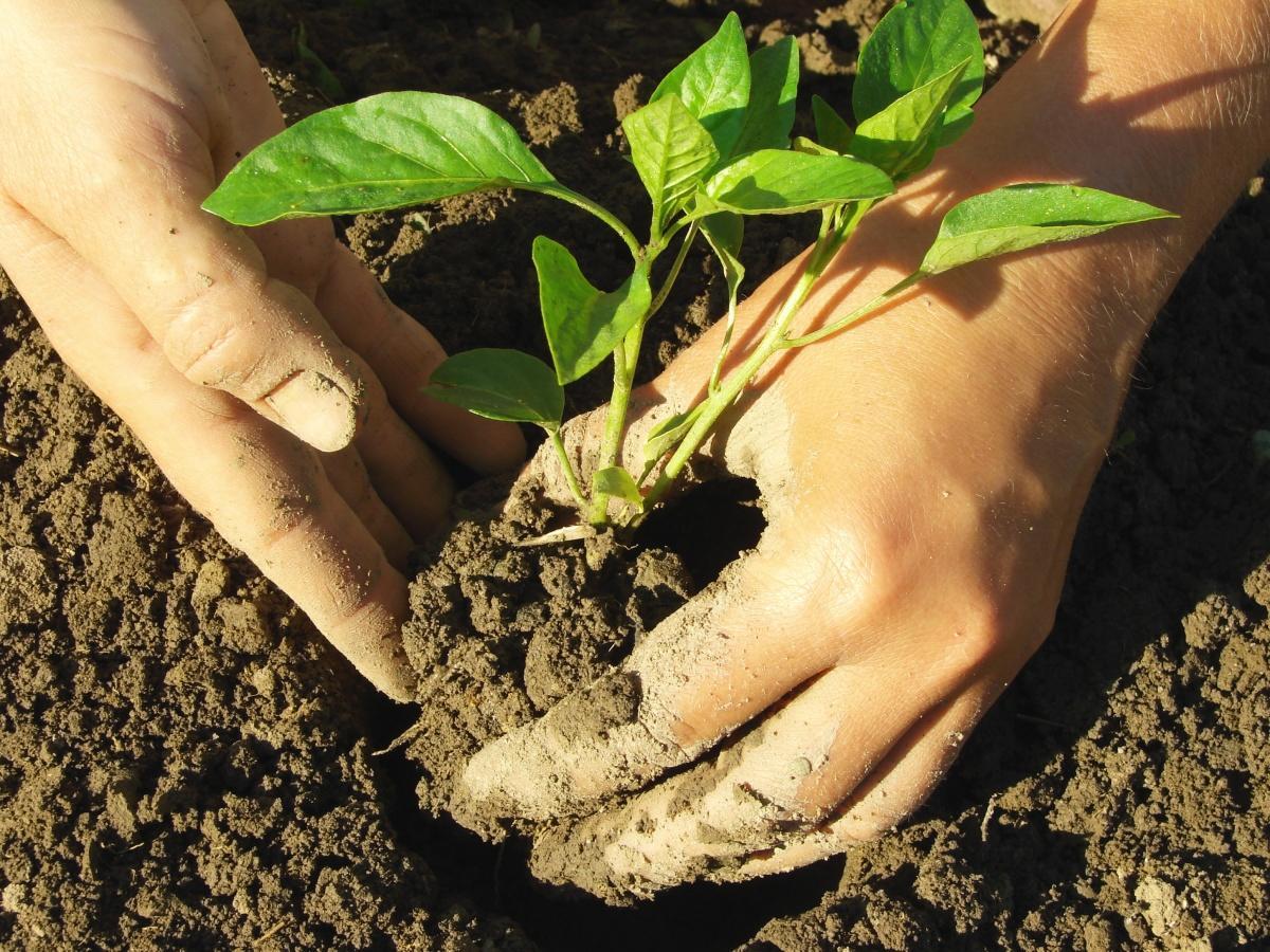 Посадка рассады: когда и как сажать семена 99
