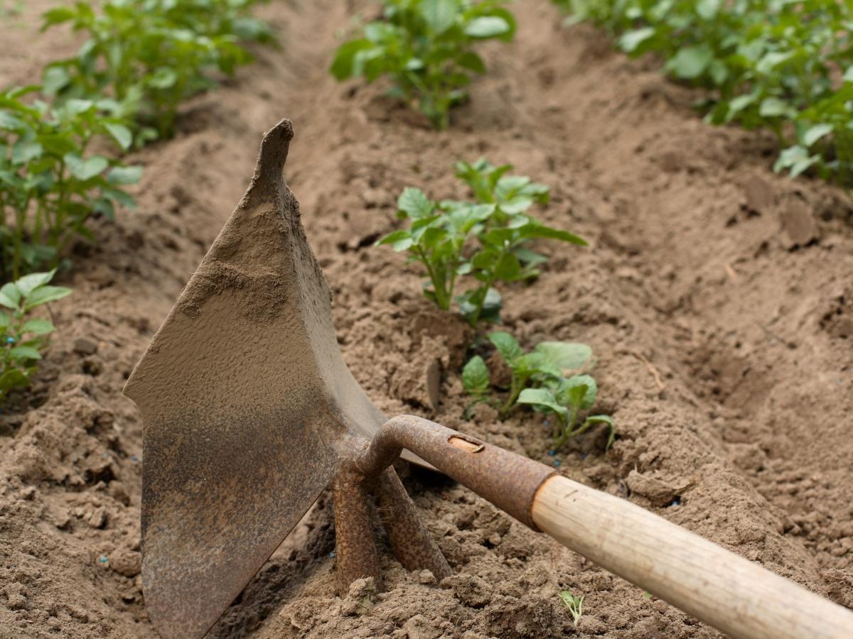 Полив картофеля своими руками