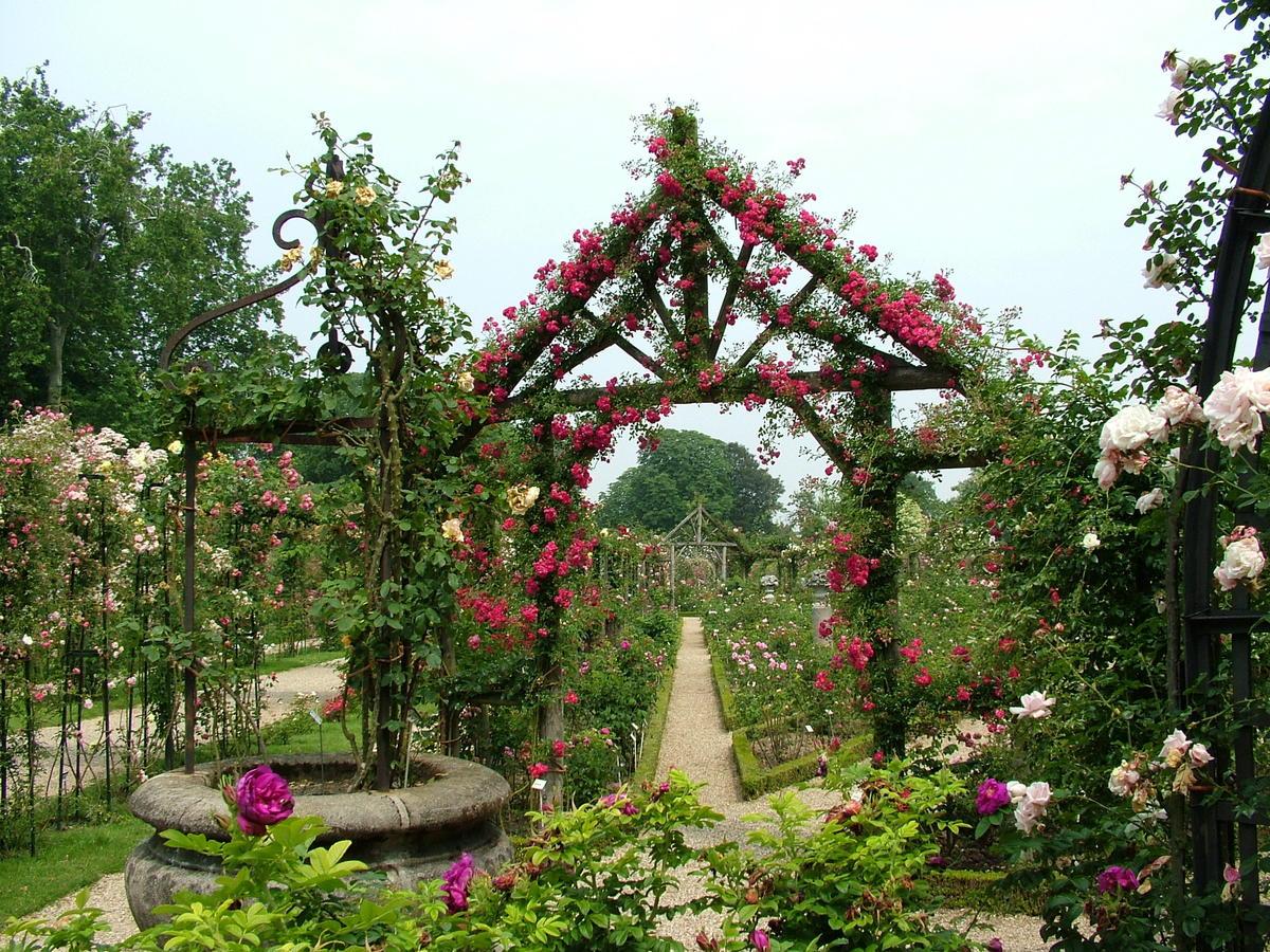 Цветы для садовых арок фото