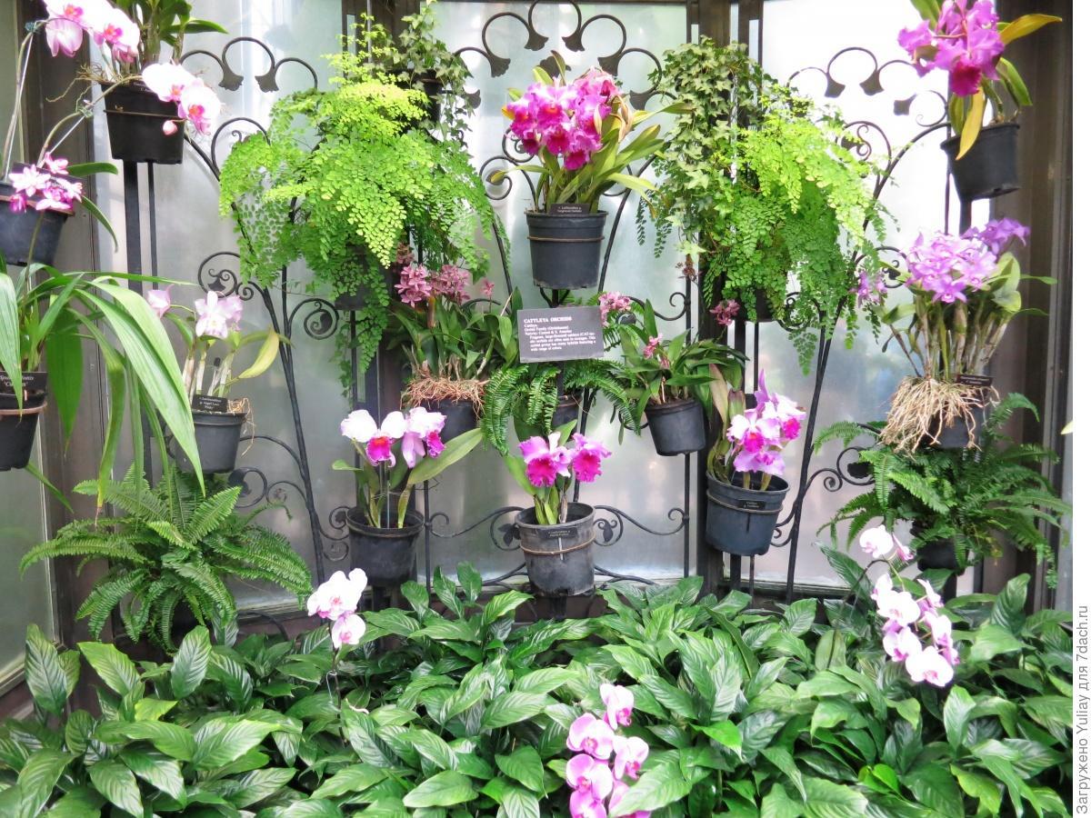 Выращивание орхидей на даче 827
