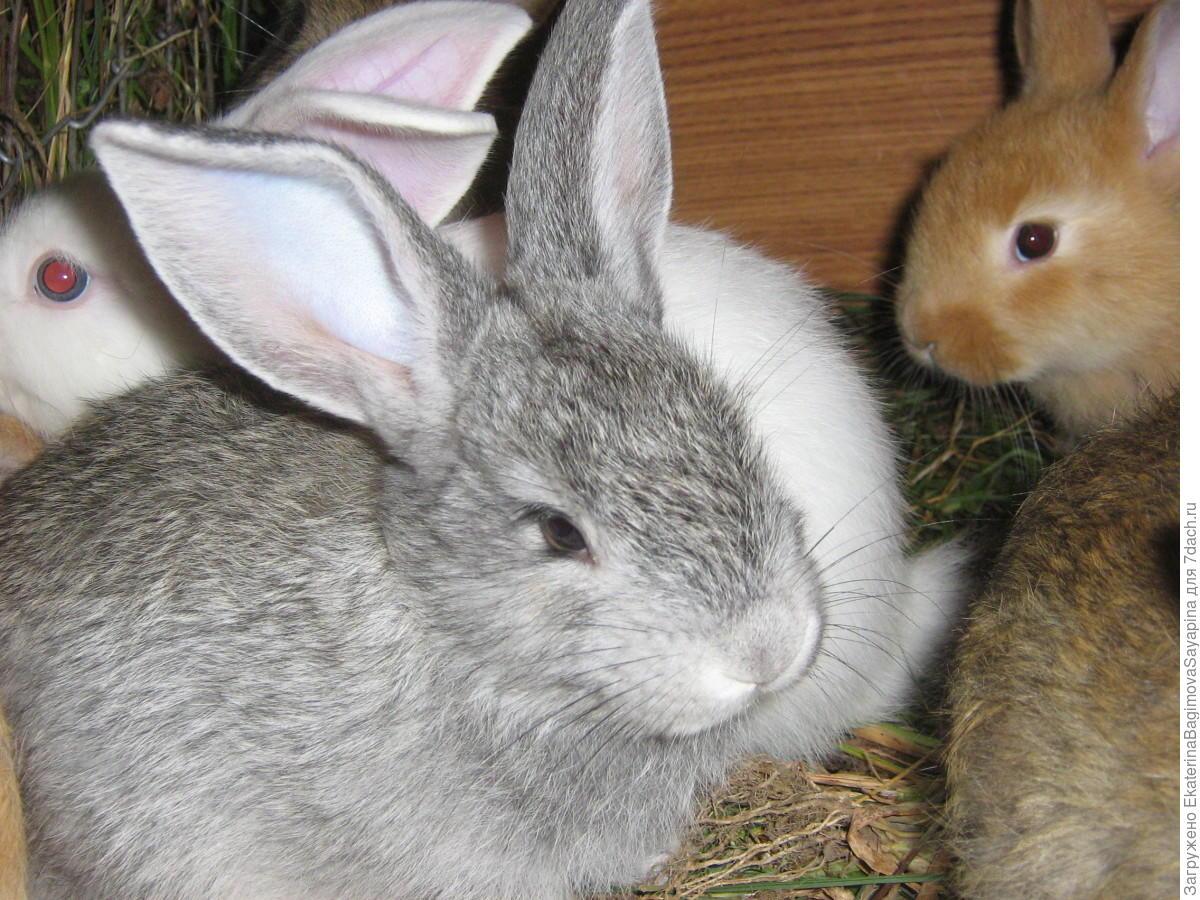 Как правильно сделать прививку кроликам самостоятельно