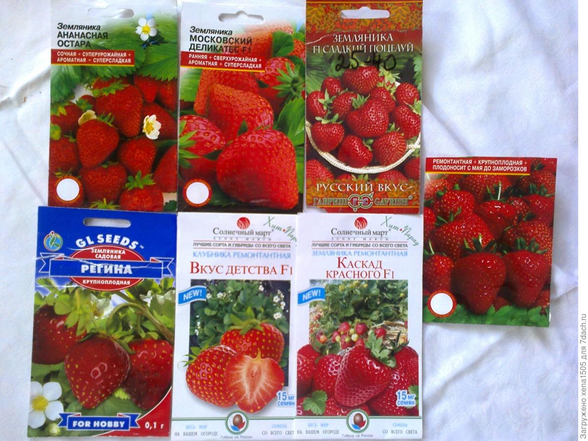 Где купит семена земляники