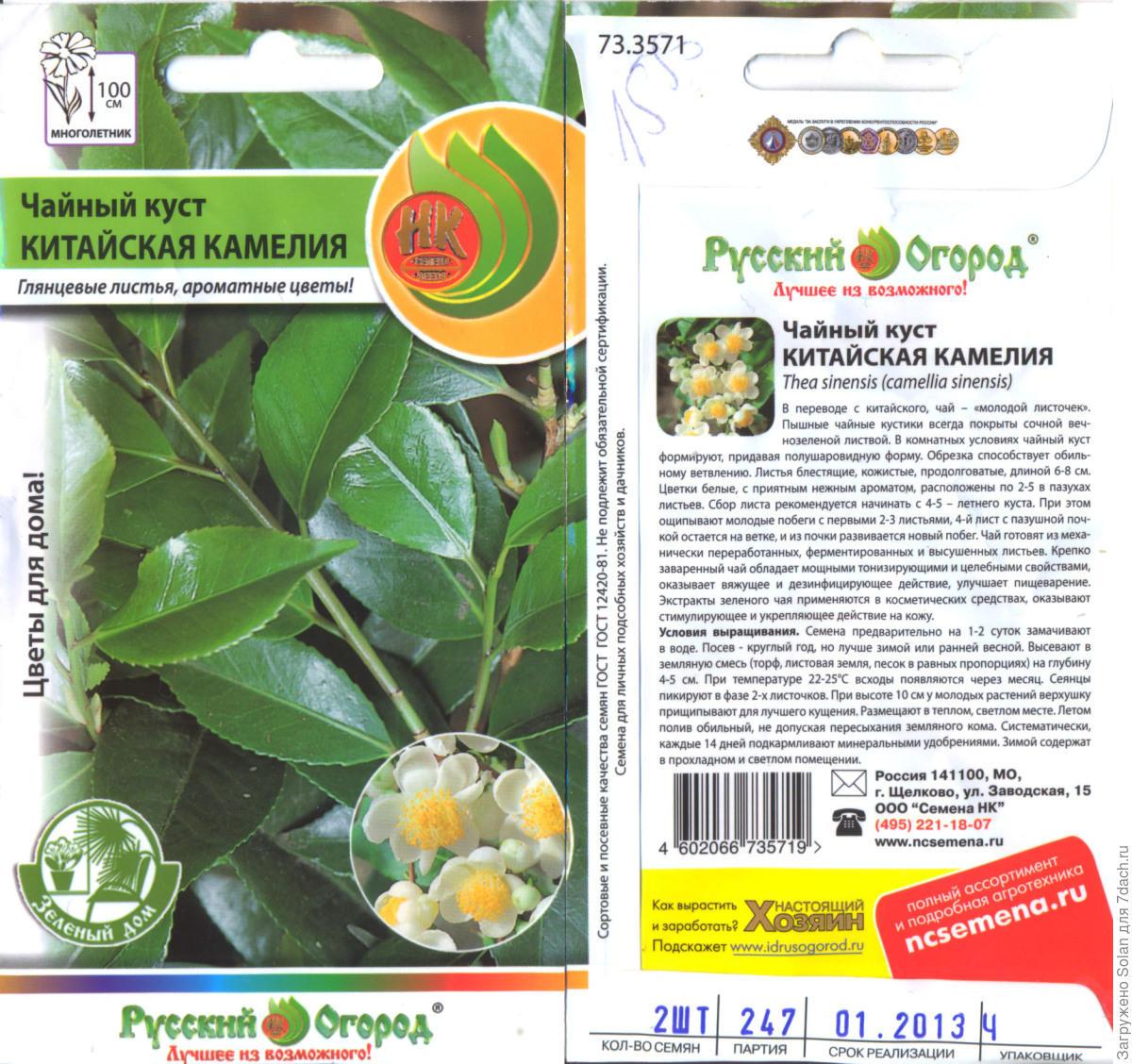 Как сажать семя чая 142