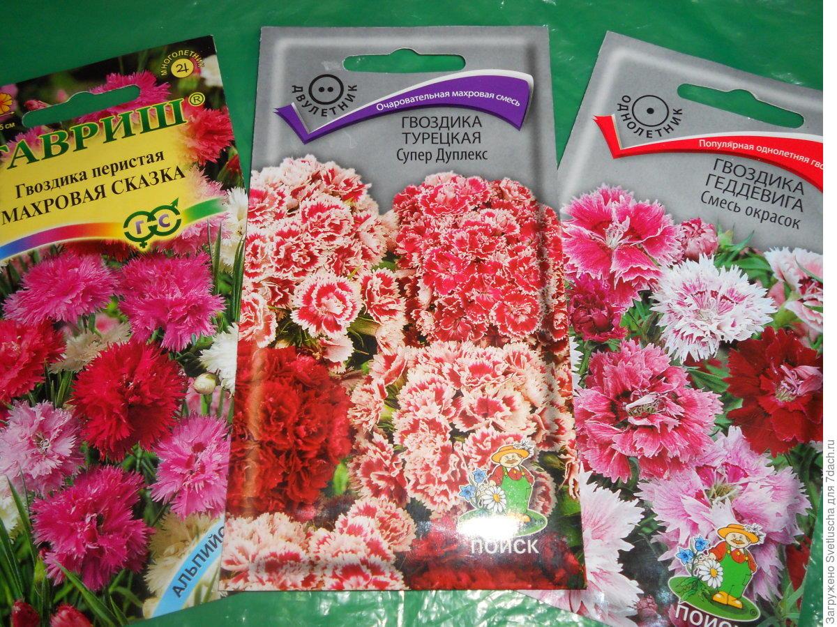 Гвоздики китайская выращивание из семян