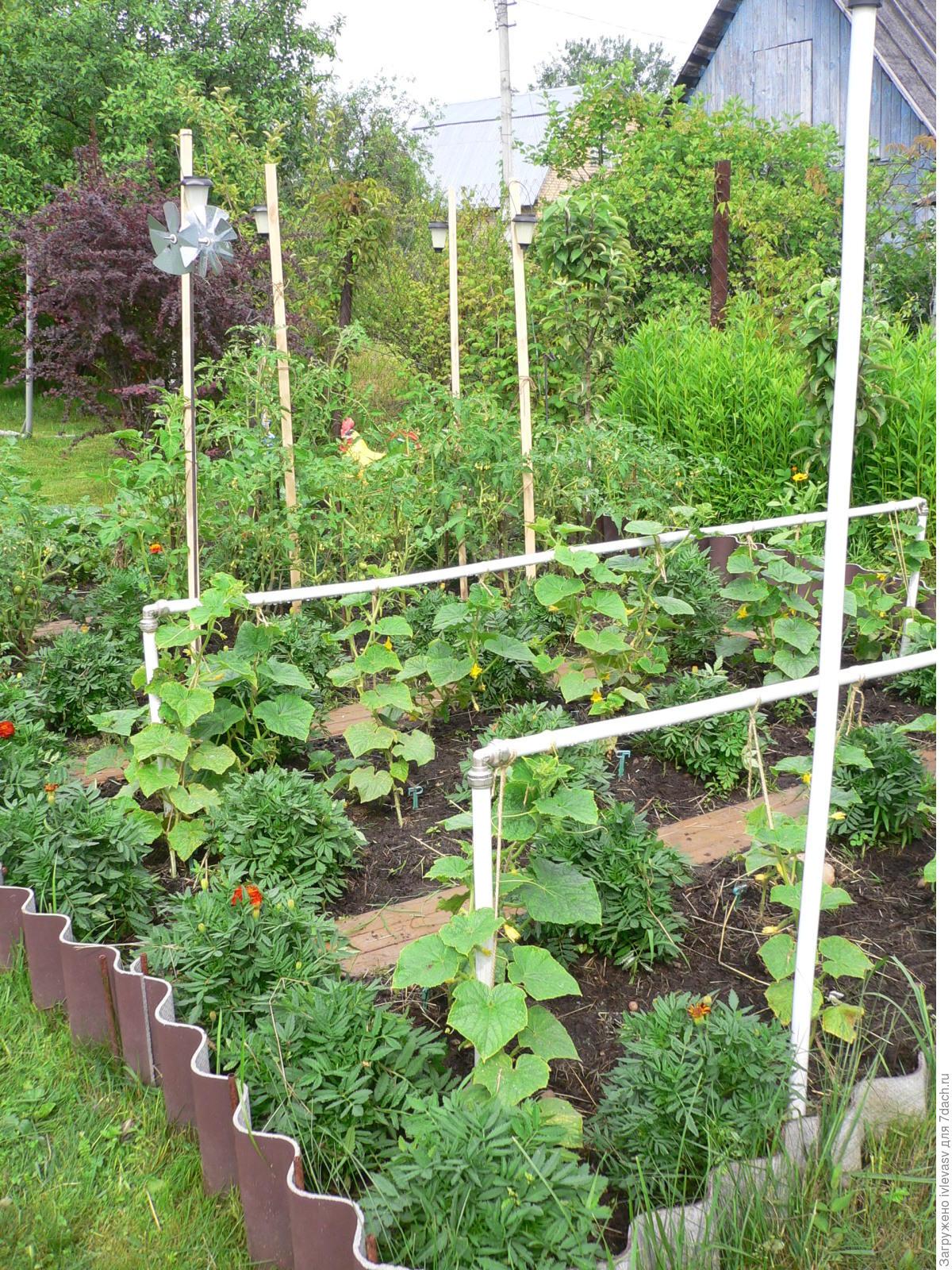 Выращивание огурцов на шпалере в открытом грунте - правила