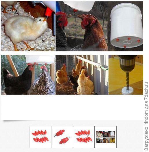 Устройство поилки для цыплят своими руками