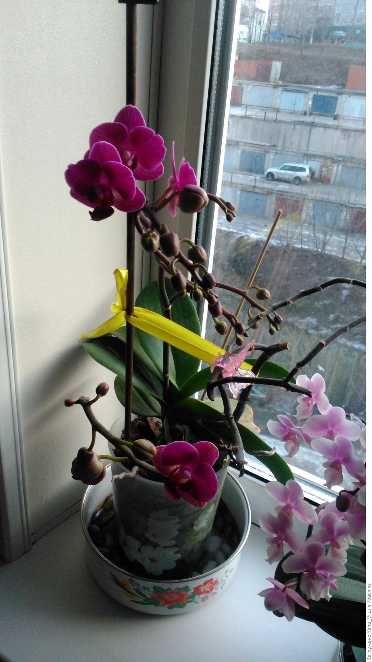 Что сделать, чтобы зацвела орхидея: стимуляция в домашних 277