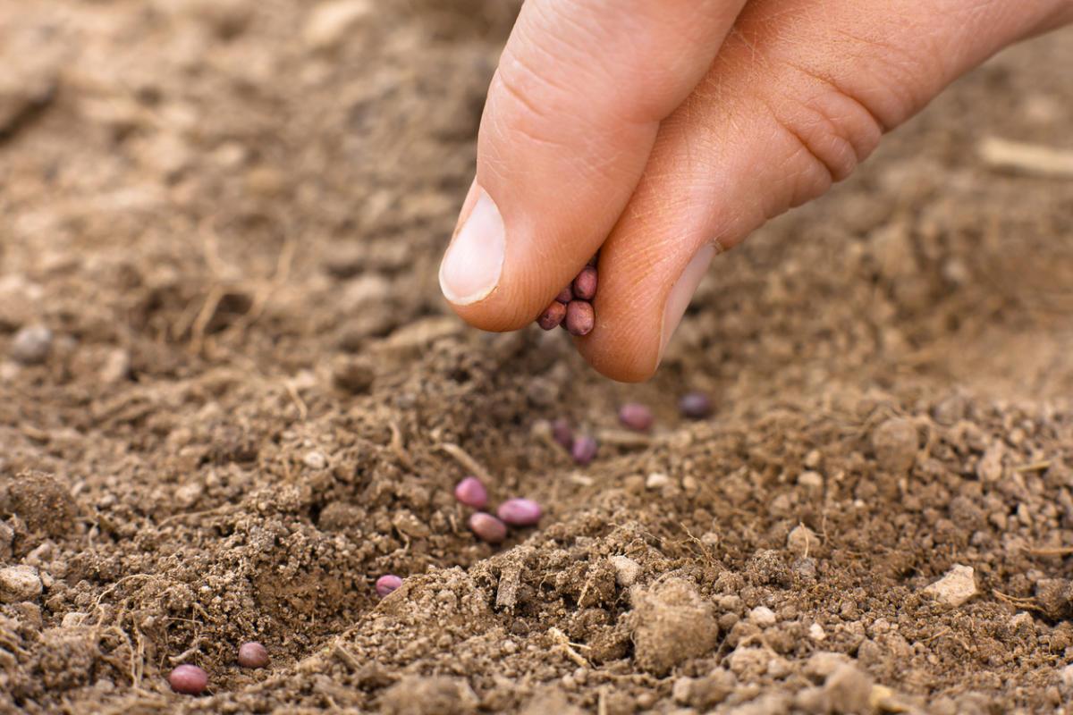 Когда и как сажать укроп семенами в открытый грунт: весной 20