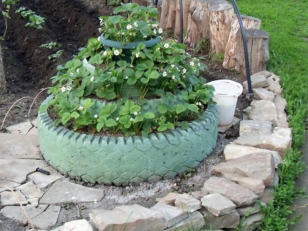 Выращивание клубники в шинах вертикально 4