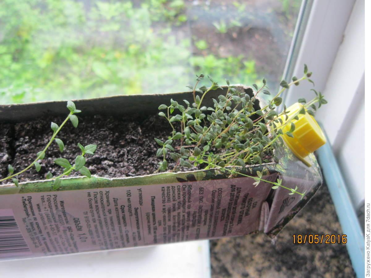 Растение 41