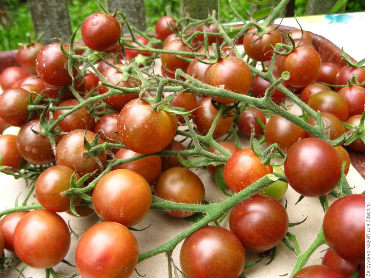 томат диковинка фото