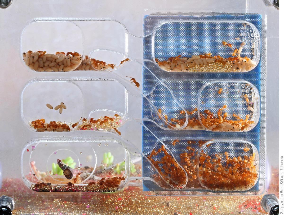 Муравьиная ферма с муравьями. Как сделать муравьиную ферму своими руками? 43