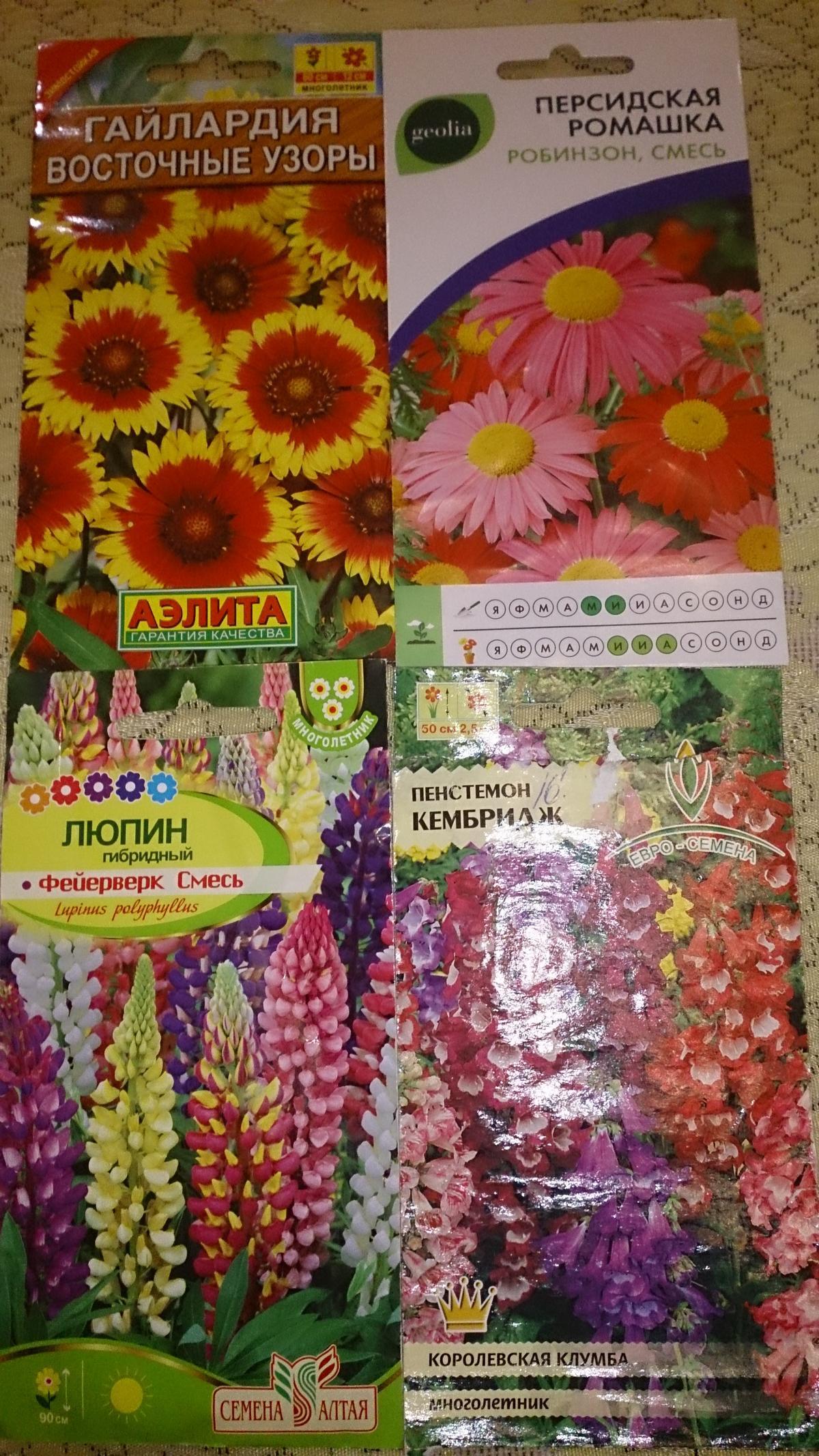 Гайлардия восточные узоры выращивание из семян 84