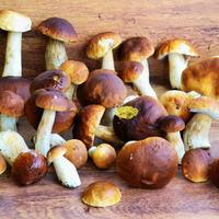Стручковая фасоль с белыми грибами