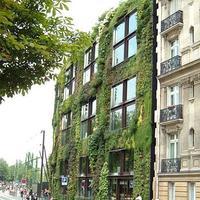 Вертикальное озеленение – ударим объемом зелени по нашим 6-ти соткам!