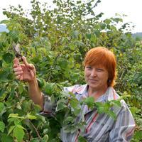 Секреты хорошего урожая малины