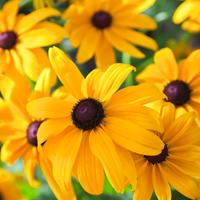 Осенняя магия сентябрьских цветов