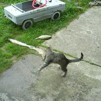 Страшный зверь на даче или однажды летом