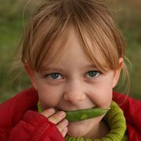 Горох посевной – вкусный, полезный, лекарственный
