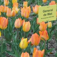 Выставка тюльпанов Никитского ботанического сада 2015 г. – «Феерия красок, чувств и эмоций»