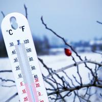 5 распространенных мифов о зимнем укрытии растений