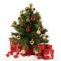 Как оставить в живых новогоднюю елку