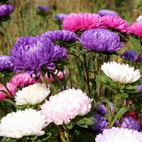 16 цветочных культур, которые нужно посеять на рассаду в апреле