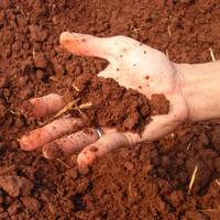 Как узнать тип почвы, и зачем это нужно
