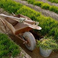 Органические удобрения из растений