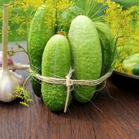 11 секретов хорошего урожая огурцов