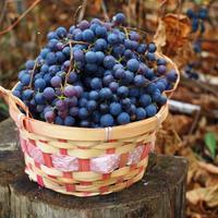 Сбор моего технического винограда