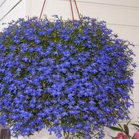 21 голубых цветов для вашего сада