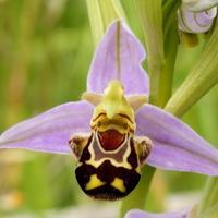 27 самых интересных орхидей
