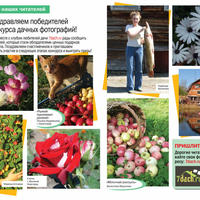 """Победители фотоконкурса - в журнале """"Дом в саду""""!"""