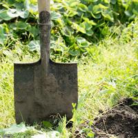 Из-под какой огородной культуры лучше всего брать землю для подготовки грунта под рассаду?