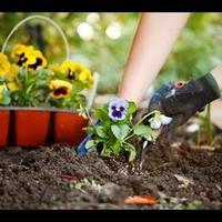 Как правильно сажать семена цветов?