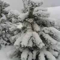 А у нас опять выпал снег!
