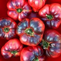 Мой любимый томат Лазурный гигант