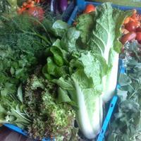 Пекинская капуста, салаты, редис, зелень осенью, или Осенние витамины. Мой урожай - 2016, глава 6