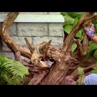 Как создать сад корней - рутарий (видео)