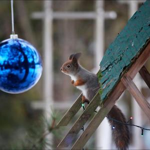 В ожидании праздника, или куда же ты, мерзкий фотограф, мои орехи заныкал