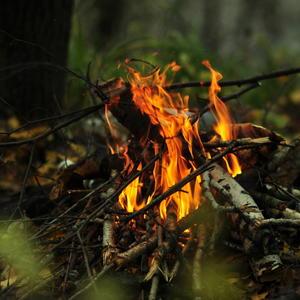 Дрова в лесу